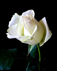 Joan Corrine Caven  January 9 1928  June 14 2018 (age 90)