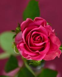 Bonnie Lynn Zerfas  July 25 1955  July 23 2018 (age 62)