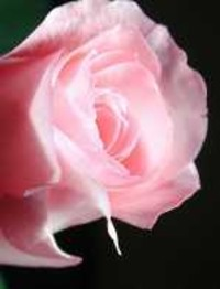 Rose Etta