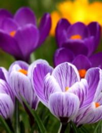 Easter Shirley Nething  2018