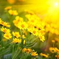 Rose Marie Davila  December 10 1955  May 6 2018