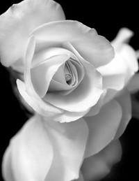 Patricia Toni Gifford  October 31 1951  February 22 2019 (age 67)