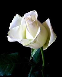Hazel Virginia Cotten Stephens  April 29 1922  March 28 2019 (age 96)