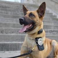 Whitley County Sheriff K9 Patrol Dog Cas  July 10 2019