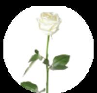 Ethelene Bronner Randolph  September 10 1925  July 25 2019 (age 93)