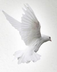 Wieslaw DeVille  September 5 2019