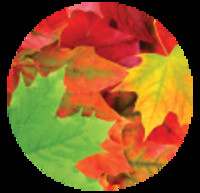 Gary Laneuville  November 17 1963  October 29 2019 (age 55)