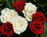 Ramona Rose Mohnike  August 4 1928  January 15 2020 (age 91)