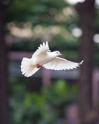 Douglas Jay Hawk  December 23 1955  February 4 2020 (age 64)