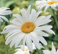 Daisy Duke Wilcox  July 7 1938  March 31 2020 (age 81)